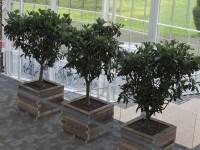 houten bloembakken tbv interieurbeplanting